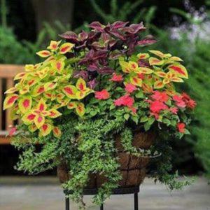 Helechos para jardines pequeños y sencillos