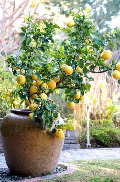 Jardines clásicos con árboles frutales