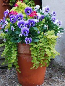 Jardines modernos con flores en macetas