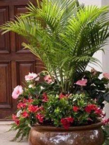 Palmas economicas para decorar jardines en macetas