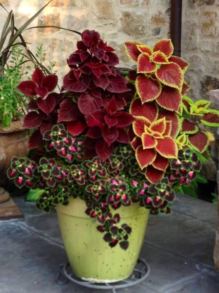 Plantas para jardines modernos y economicos
