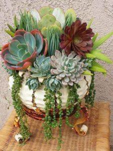 Suculentas para decorar jardines economicos
