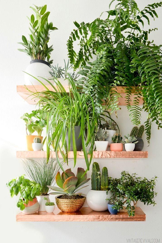 Decoracion de interiores con plantas naturales