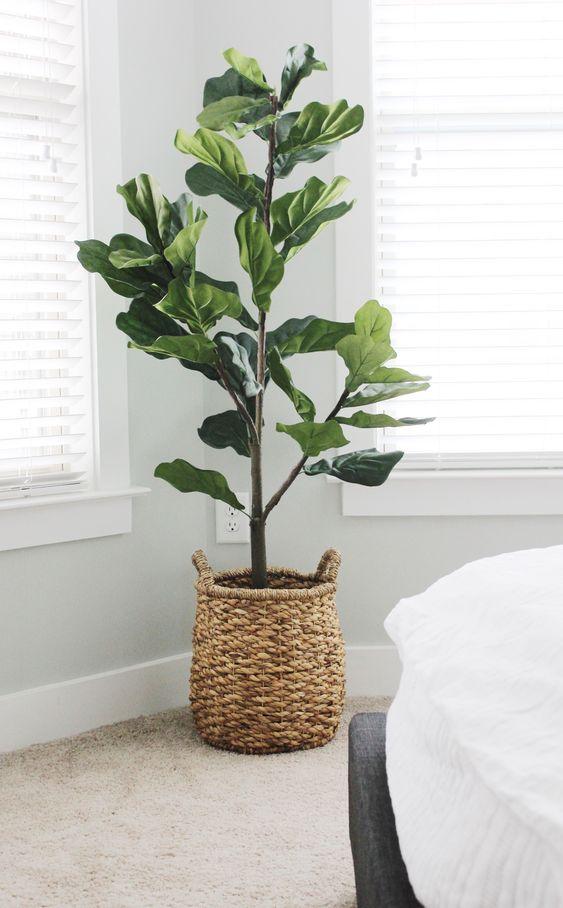 Plantas de sombra para decorar interiores