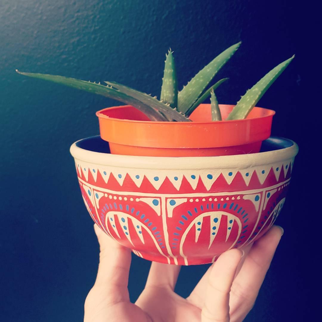 10 Plantas que necesitas tener en casa - áloe vera