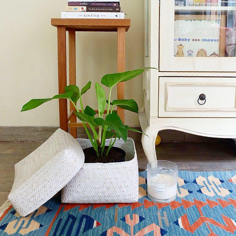 10 Plantas que necesitas tener en casa - fildendros