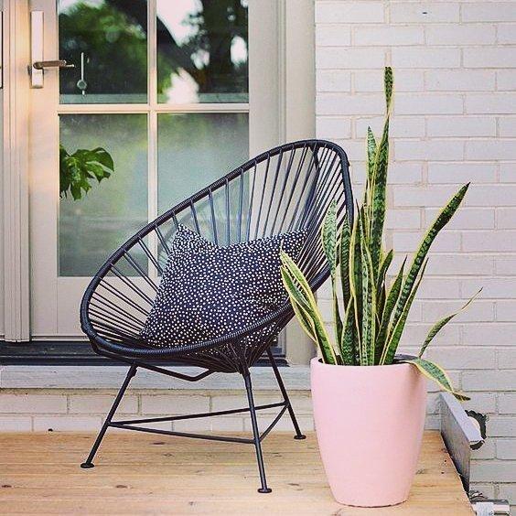 10 Plantas que necesitas tener en casa - lengua de suegra