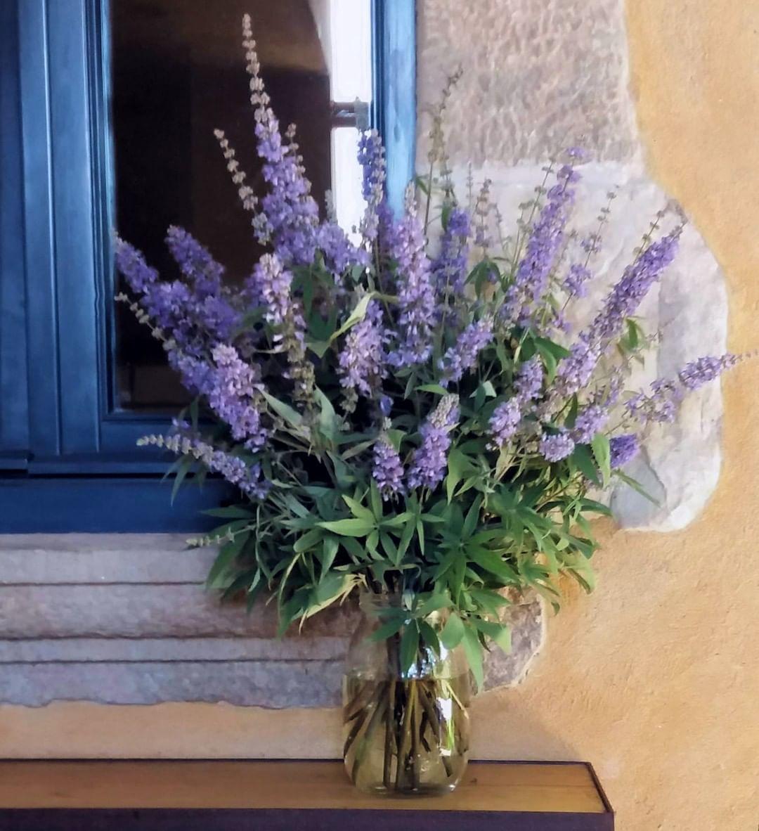 15 razones por las que tener plantas en casa